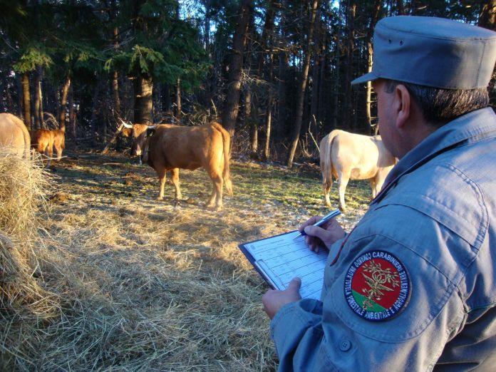 Pascolano bestiame nel parco Biodiversità, danni. Denunciati i pastori