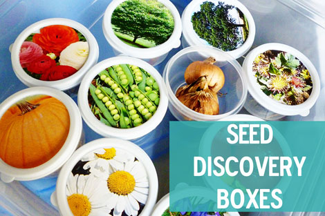 Seed boxes