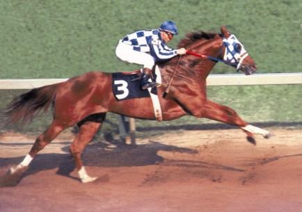 Secretariat. Famous Racehorses