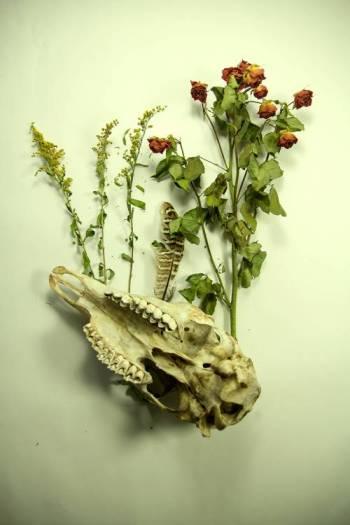 Skull-with-flowers optimised