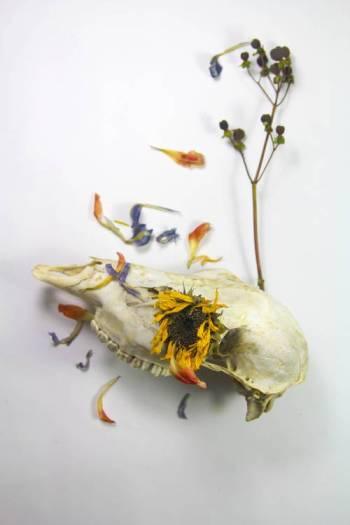 Skull-with-sunflower optimised
