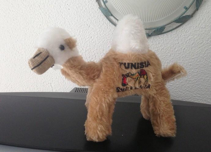 Верблюд из Туниса