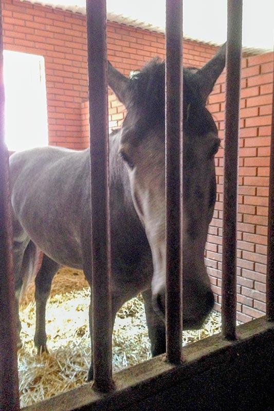 Лошадь в Жашкове