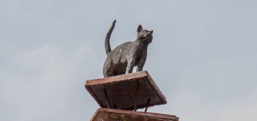 Кот на трубе