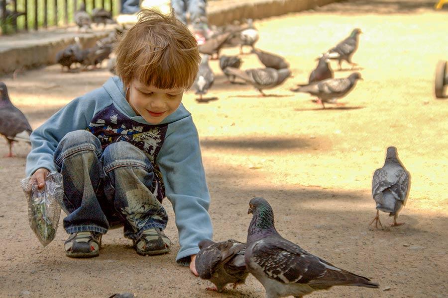 Борис и голуби