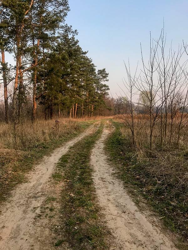 Дорого вдоль лесочка