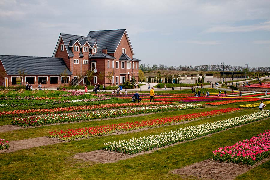Парк тюльпанов под Киевом Добропарк