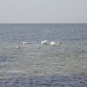 Черное море и Лебеди