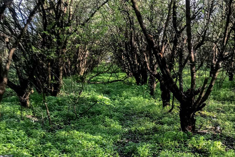Святопетрівське фруктовий сад