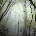 Retrato espiritual del bosque finlandés