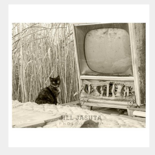 Cat and Old TV Eastern Shore Greeting Card PRODUCT