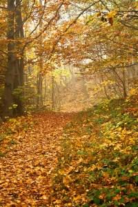 fall path unsplash