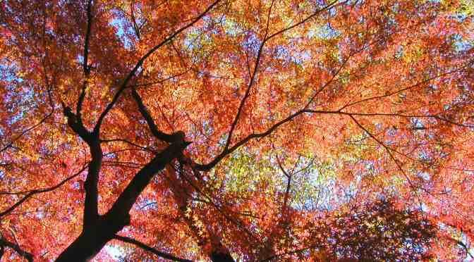 【壁紙】紅葉 – 一昔前