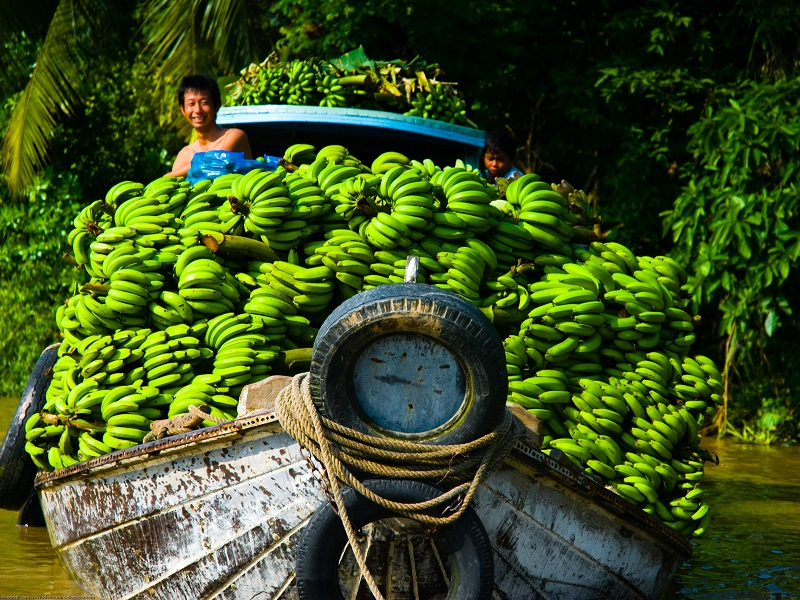 Explore the Mekong delta on your Vietnam holiday