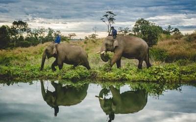 Airavata Elephant Foundation