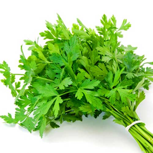 italian parsley seeds natural seed bank