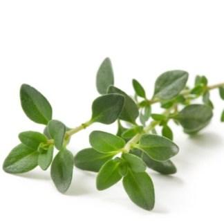 english thyme seeds