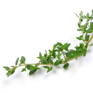 french thyme seeds