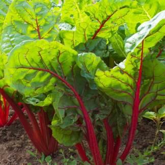 rhubarb Swiss Chard