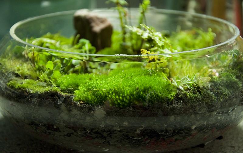 moss garden, moss gardens