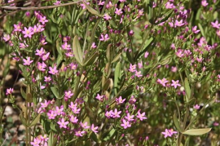 Flower shop near me shrub with small pink flowers flower shop shrub with small pink flowers the flowers are very beautiful here we provide a collections of various pictures of beautiful flowers charming mightylinksfo