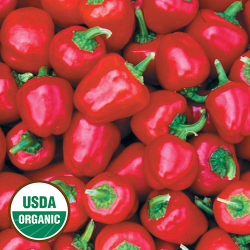 Miniature Red Bell Organic Pepper Seed Savers Exchange