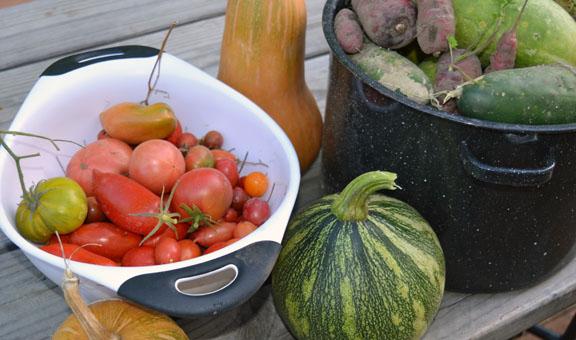 late season squash and tomatoes