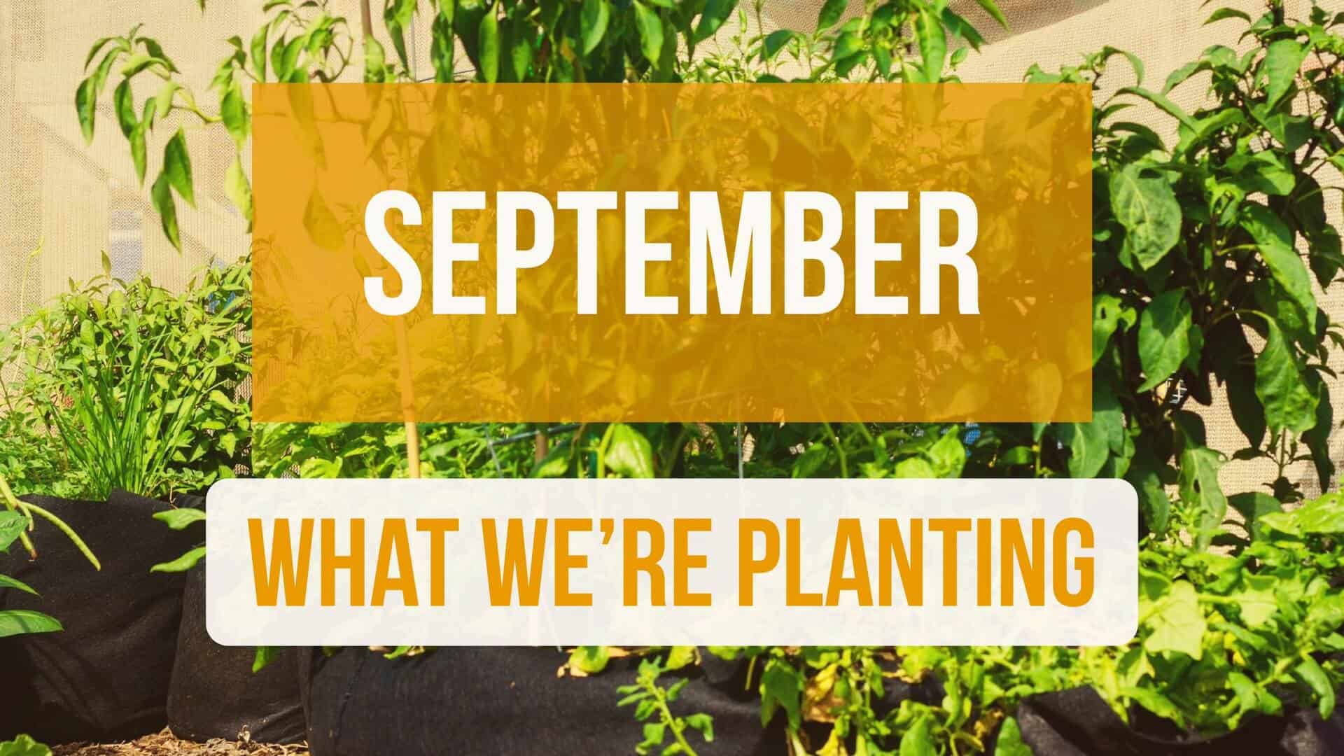 What We're Planting in September!