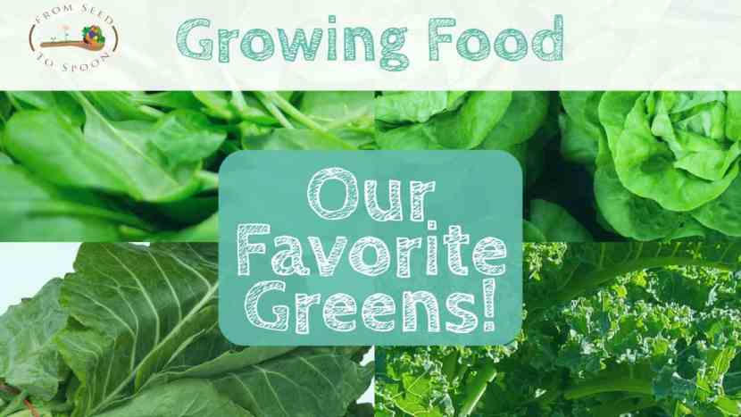 Our 5 Favorite Greens!