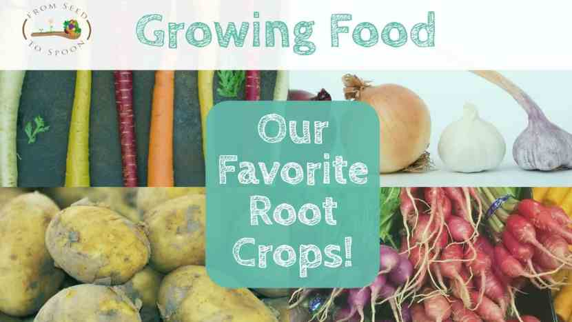 Our Favorite Root Crops!