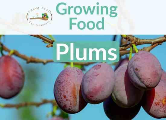 Plum blog post