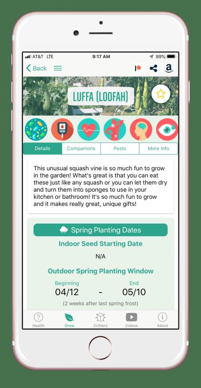 growing luffa backyard