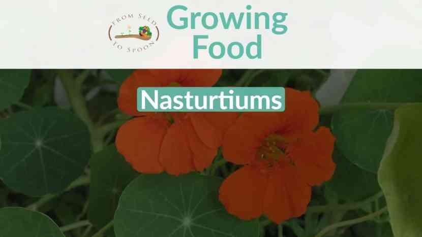 Nasturtiums blog post