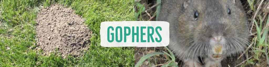 gophers-header