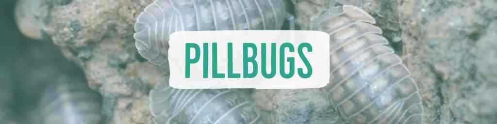 pillbugs-header2