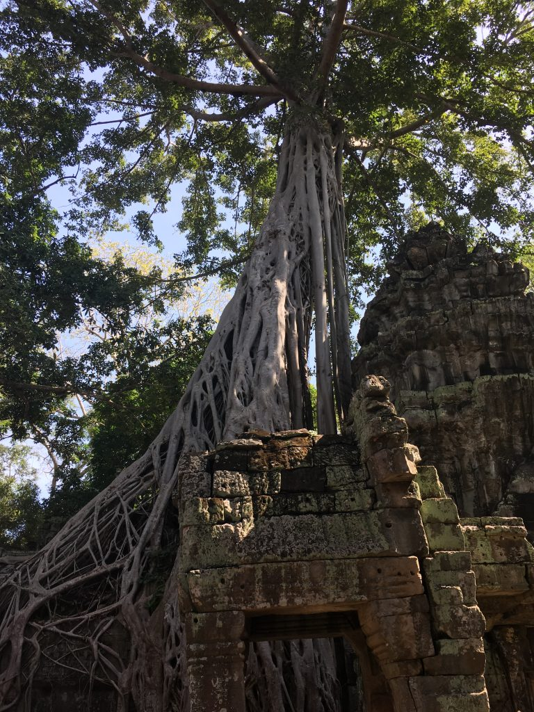 A must: the Jungle Temple - Ta Prohm