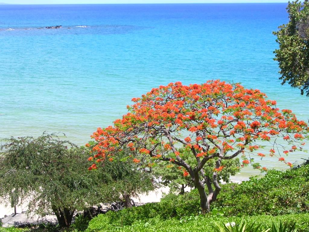 Kona Big Island Hawaii Beach Generative Abstract Art