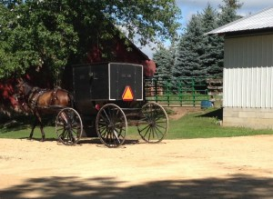 horse buggy trot