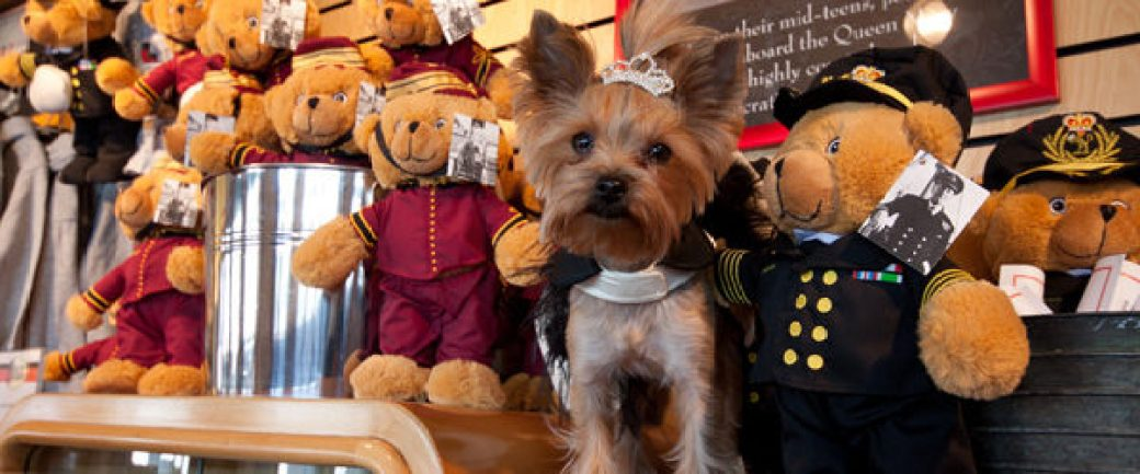 Chloe the Terrier Hidden in Toy Bears