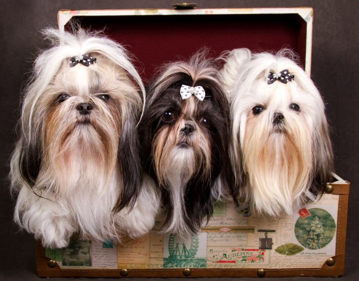 Three dogs in a chest