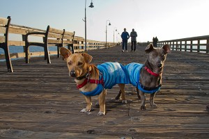 Dogs enjoying Ventura