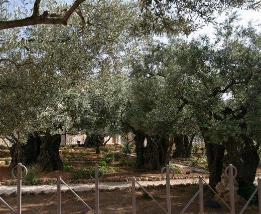 Gethsemane See The Holy Land