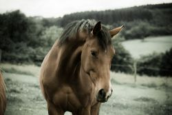 cavallo_liberta-adf2b318-1