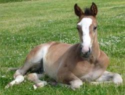 foal-ec58d02b