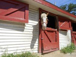 horse-141914_1280-319bb4f0