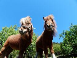 pony-255464db