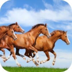 app-sef-8e6411b6