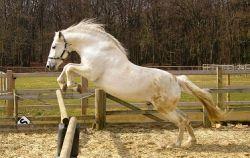 cavalli-spagnoli_ng1-57fc971c-1