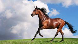 cavallo_jpg-cb3889f6-2