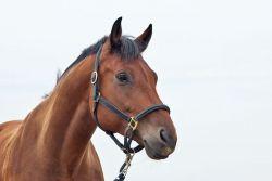 cavallo_sfondobianco-fd4011c1